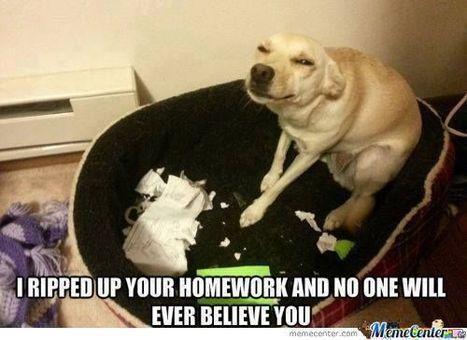 """My Dog ate my Homework"" | Policies: (1) Homework and (2) Standard Testing | Scoop.it"