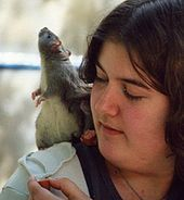 Rats display empathy, so why don't animal experimenters?   Animals R Us   Scoop.it