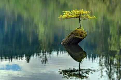 Twitter / Globe_Pics: A small fir tree that has become ... | Gardening Inspiration and Information | Scoop.it