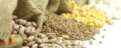¿Qué es la fibra? | Mitos y realidades de la comida | Scoop.it