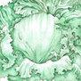 Lettuce: Iceberg Superior   Simply Grow Great Food   Scoop.it