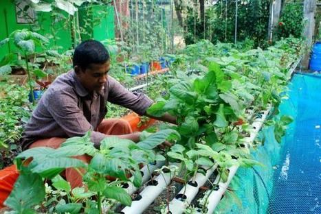 Testing the waters for gardening - Aquaponics in India | Aquaponics in Action | Scoop.it