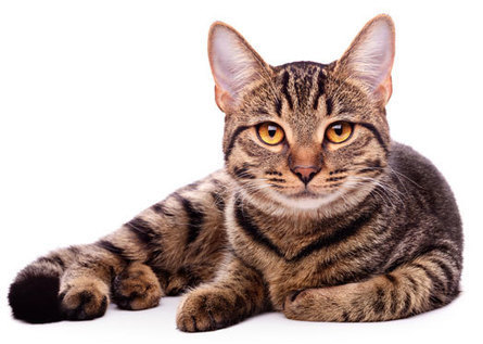 12 Signs You Probably Own A Cat | GJW TITMUSS PET BLOG | Scoops! | Scoop.it