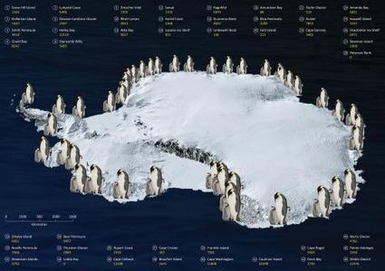 Counting penguins from space | I Love Penguins | Scoop.it