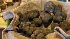 La truffe, le trésor enfoui du Périgord | Dimanche 26 janvier à 19H - France 3 | Agriculture en Dordogne | Scoop.it