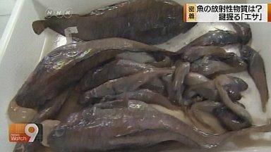 Une étude révèle la présence de radiation dans du plancton | NHK WORLD French | Japon : séisme, tsunami & conséquences | Scoop.it