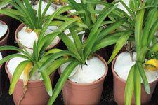 Le tissu anti-sécheresse  : Terralenx | agriculture de conservation | Scoop.it