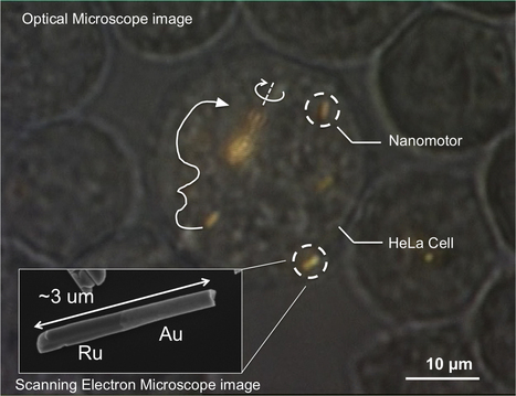 Nanomotors that are controlled, for the first time, inside living cells | KurzweilAI | NBIC | Scoop.it