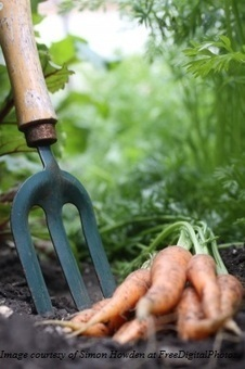 5 Useful Tips on Cleaning Your Rusty Garden Tools | Outoor Fencing | Scoop.it