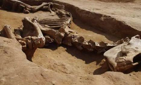 Archéologie : Découverte en Lorraine d'un cheval de 1.500 ans – 09 ... - Camer Post | Histoire et Archéologie | Scoop.it
