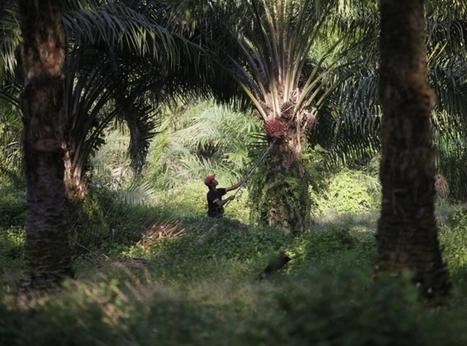 Carrefour, Auchan, Casino… ont un impact trop lourd sur la biodiversité! - France Inter | Environnement et développement durable | Scoop.it