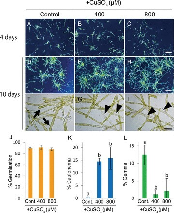 Copper mediates auxin signalling to control cell differentiation in the copper moss Scopelophila cataractae | plant cell genetics | Scoop.it