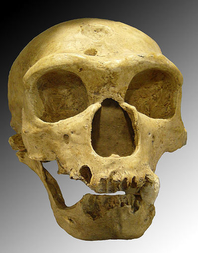 Neandertal Technology --New Discovery Shows They Made Planet's First Bone Tools   JOIN SCOOP.IT AND FOLLOW ME ON SCOOP.IT   Scoop.it