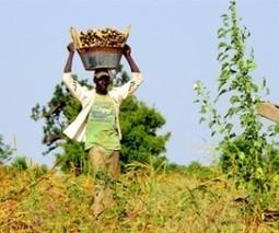 L'industrialisation de l'agriculture malienne : des partenaires français s'engagent | Questions de développement ... | Scoop.it