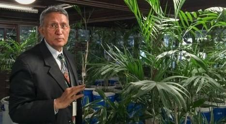 Kamal Meattle, l'homme qui purifie notre air grâce aux plantes | La Location de plantes | Scoop.it