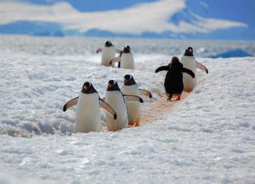 Two huge marine sanctuaries coming up in Antarctica | Conservation | Scoop.it
