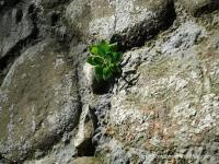 ¿Cómo vas de resiliencia?(I) | Resiliencia | Scoop.it