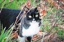 Care for feral cats - U-T San Diego   The Funniest Cats In The World!   Scoop.it