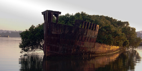 This century-old abandoned ship now hosts a floating forest | Steve Troletti Nature and Wildlife Photographer | Scoop.it