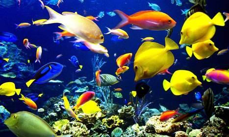 Alarma mundial: La mitad de la población marina ha desaparecido en los últimos 40 años | GrandesMedios.com | CTMA | Scoop.it