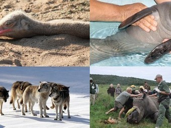 The Week in Animal News: Orphaned Baby Manatee Rescued, Michigan Wolves Near Extinct and More | Vertical Farm - Food Factory | Scoop.it