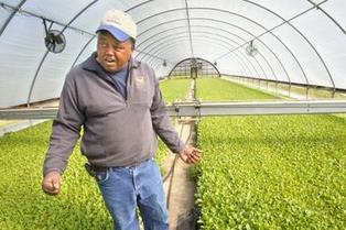 Will exports save North Carolina's tobacco farms? | Greensboro News & Record | North Carolina Agriculture | Scoop.it