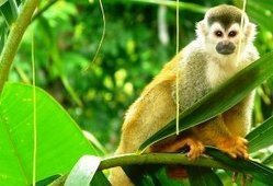 Costa Rica Adventure Tours | Amazon River Cruise Tour's | Scoop.it