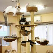 Le cafe des chats, un salon de the avec des chats, a Paris. | Les chats c'est pas que des connards | Scoop.it