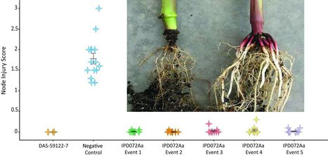 A selective insecticidal protein from Pseudomonas for controlling corn rootworms | Interaction, and more... | Scoop.it