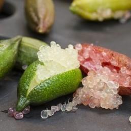 Citron Caviar d'Australie (Microcitrus australasica) Graines fraiches rares - Alsagarden | MILLESIMES 62 : blog de Sandrine et Stéphane SAVORGNAN | Scoop.it