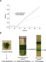 Composition and structure of photosystem I in the moss Physcomitrella patens | plant cell genetics | Scoop.it
