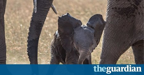 Share your encounters with elephants | Pachyderm Magazine | Scoop.it