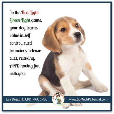 A Dog Enrichment Game | Lisa Desatnik, certified dog trainer | Modern dog training methods and dog behavior | Scoop.it