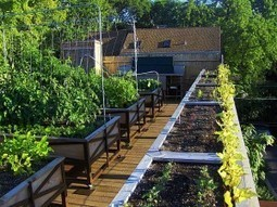 Rooftop Farming: From Farm to Table in One Restaurant | Trends, Fads, Buzz & Social Media | Scoop.it