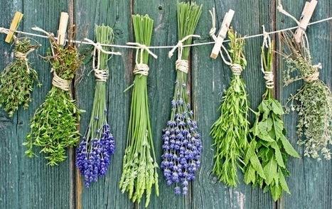 Egészség: Idősebb Korban is Segíthetnek az Immunrendszerünk Megerősítésében a Gyógynövények | 50 Évesen | Scoop.it