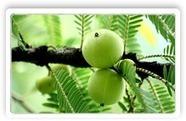 Amla Herbal Extract   Natural Remedies For Health Benefits   Scoop.it