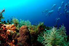 NOAA CoRIS - What are Coral Reefs | All about water, the oceans, environmental issues | Scoop.it