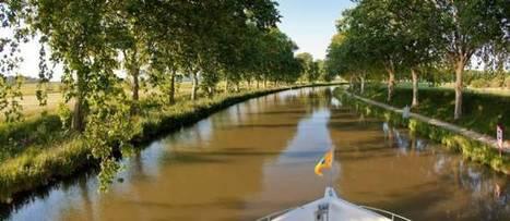Une partie des platanes provisoirement sauvée | Histoire Canal du Midi | Scoop.it
