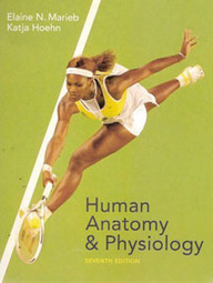 Test Bank For » Test Bank For Human Anatomy And Physiology, 7 Revised ed of US ed edition: Elaine Nicpon Marieb Download | Anatomy & Physiology Test Bank | Scoop.it