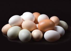 True Free-Range Eggs -- Community Chickens | Annie Haven | Haven Brand | Scoop.it