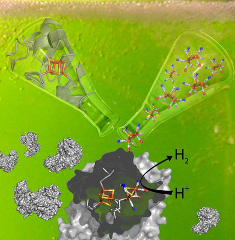 Spontaneous activation of [FeFe]-hydrogenases by an inorganic [2Fe] active site mimic   SynBioFromLeukipposInstitute   Scoop.it