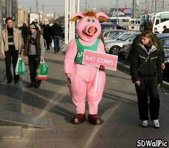 Plz Save Pig | Free HD Desktop Wallpapers Download Online | Funny Pic And Wallpapers | Scoop.it