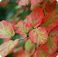 US Forest Service Offers Planning Tools for Your Fall Colors Vacation   The Miracle of Fall   Scoop.it