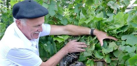 L'avenir de la vigne se trouve... dans son passé? | Le Vin et + encore | Scoop.it