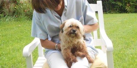Pays basque : elle retrouve sa chienne... sept ans après | CaniCatNews-actualité | Scoop.it