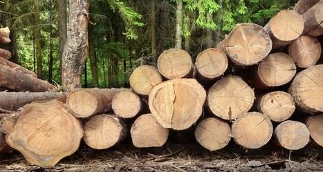 Non, la forêt n'est pas qu'une niche fiscale | abibois | Scoop.it