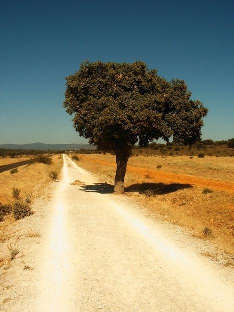 Días y noches en el camino de Santiago. La vida cotidiana de un peregrino medieval (3ª Parte) | Camino de santiago | Scoop.it