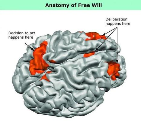 """What """"Free Will"""" Looks Like in the Brain 