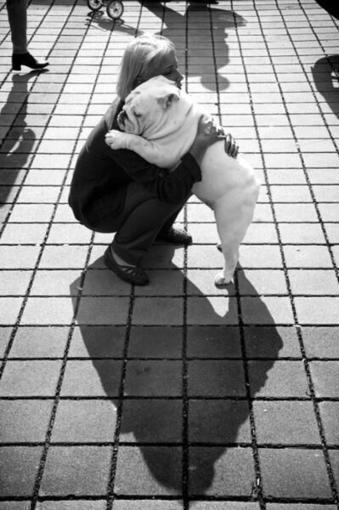 Tweet from @CuteEmergency | Dog Lovers | Scoop.it