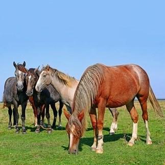 L'Avenir | Déjà 25 chevaux morts depuis début novembre | L'actualité de l'Université de Liège (ULg) | Scoop.it